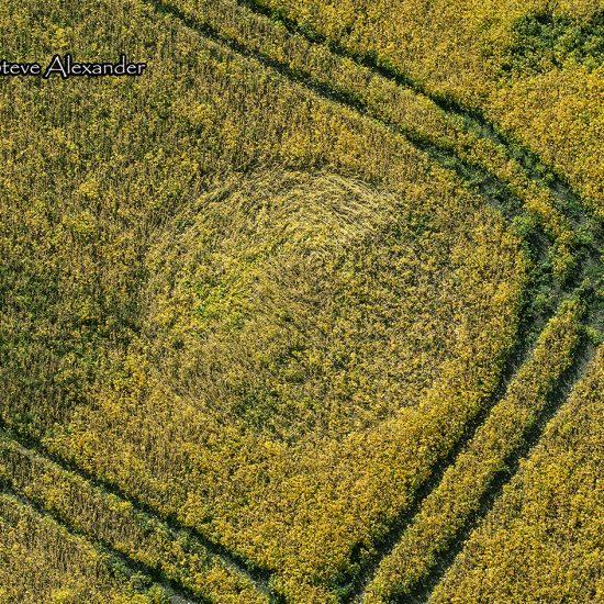 Marden Copse, Chirton, Wilts | 7th Sept 2020 | Mustard Seed? | OH3 Marden Copse, Chirton, Wilts | 7th Sept 2020 | Mustard Seed? 1.-Marden-Copse-Chirton-Wilts-07-09-20-OH